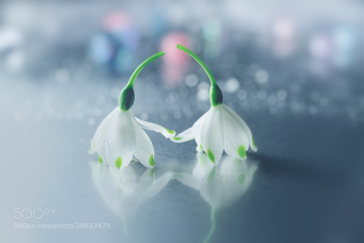 Photograph Two of us by Lafugue Logos on 500px