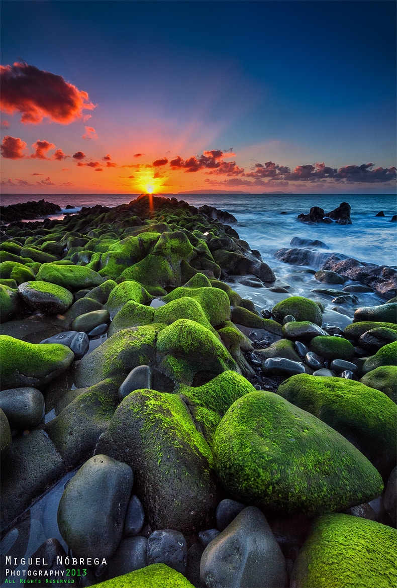 Photograph Mixed Colors by Miguel Nóbrega on 500px