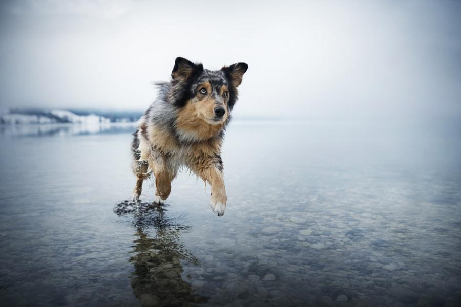 Jump....jump.... by Anne Geier on 500px.com