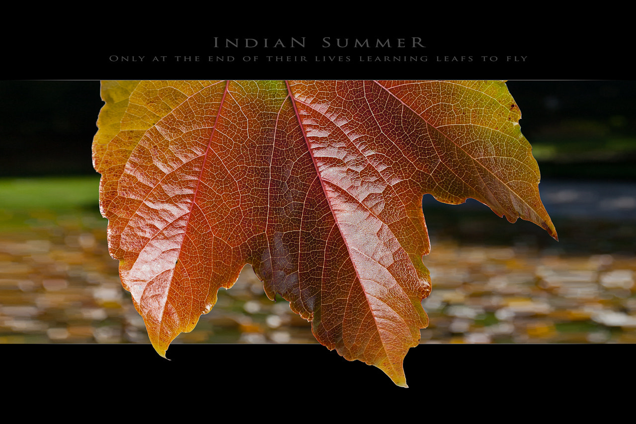 Photograph Indian Summer by Michael Macho on 500px