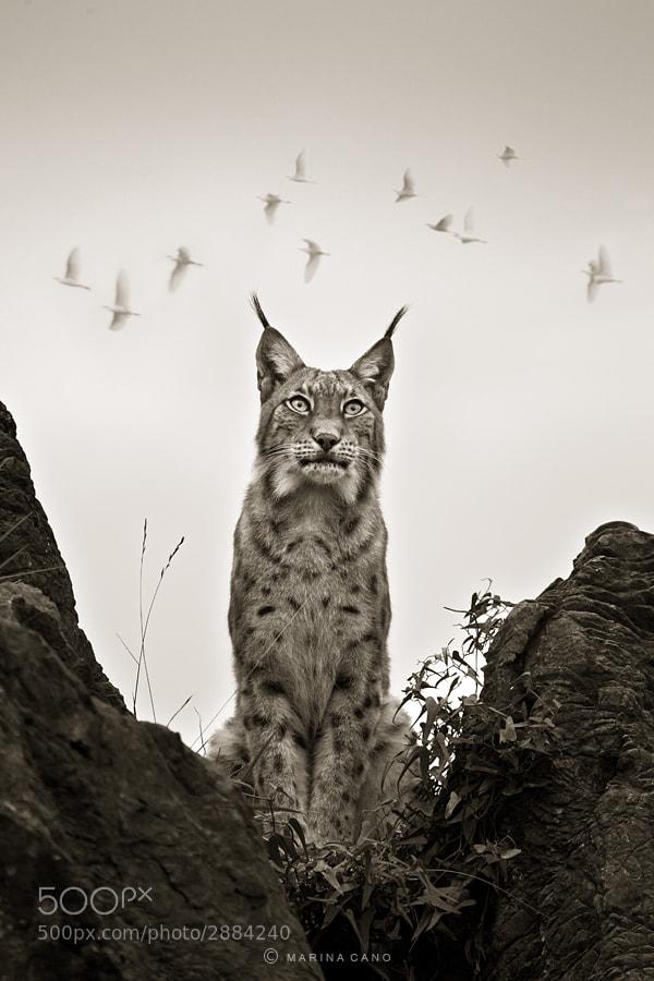Photograph Imagine Birds by Marina Cano on 500px