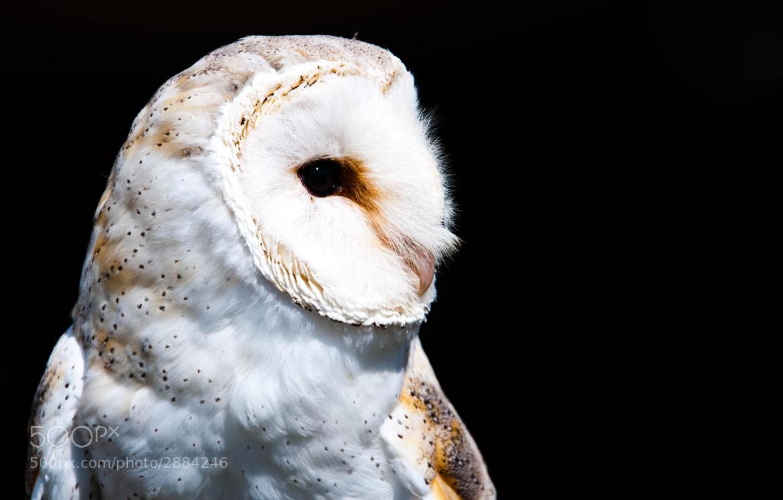 Photograph Barn Owl by Luke Millward on 500px