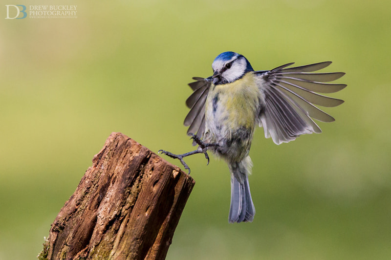 Photograph Touchdown by Drew Buckley on 500px
