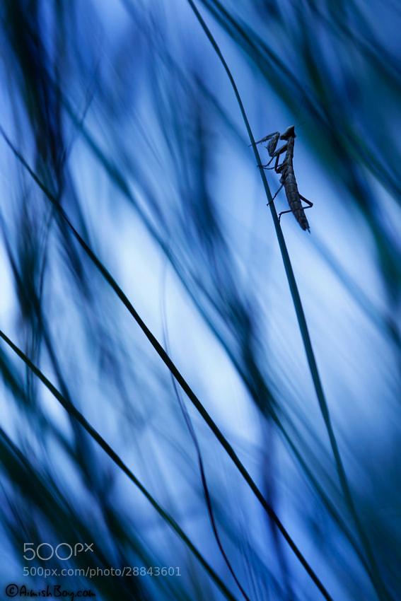 Photograph Misty Blue by AimishBoy (Nadav Bagim) on 500px