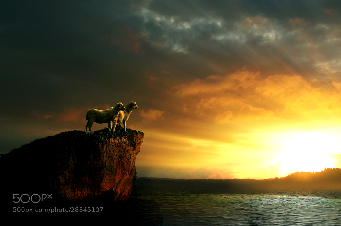 Photograph Two sheep by 3 Joko on 500px