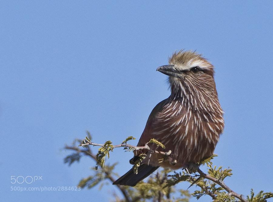 Taken in Etosha National Park, Namibia 26th June 2011