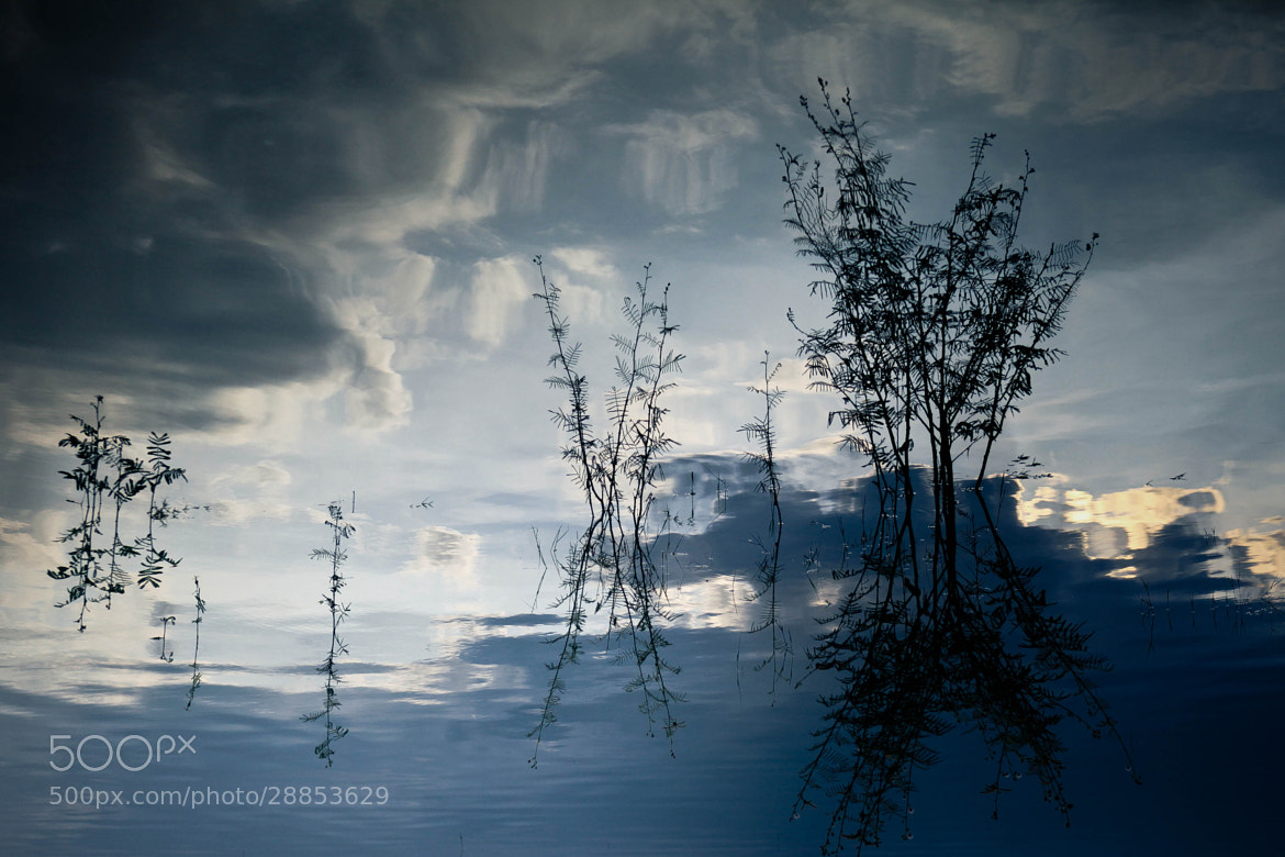 Photograph Reflection or imaginary by Anh Nguyen on 500px