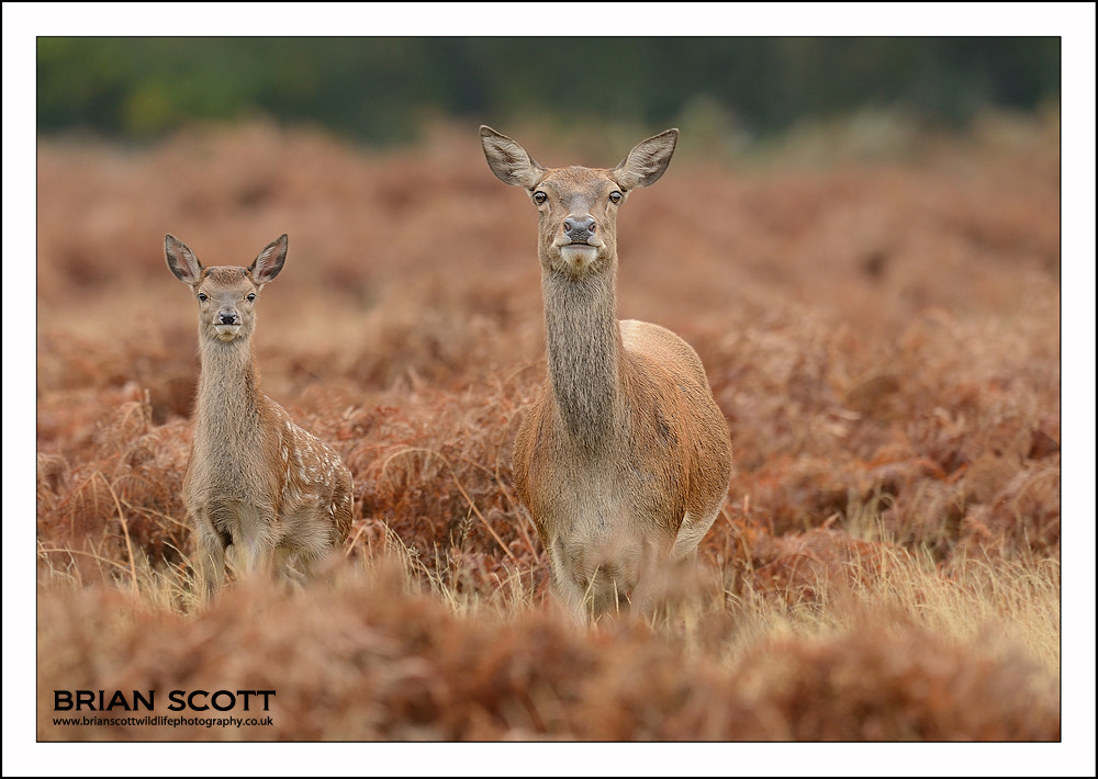 Photograph On Alert by Brian Scott on 500px
