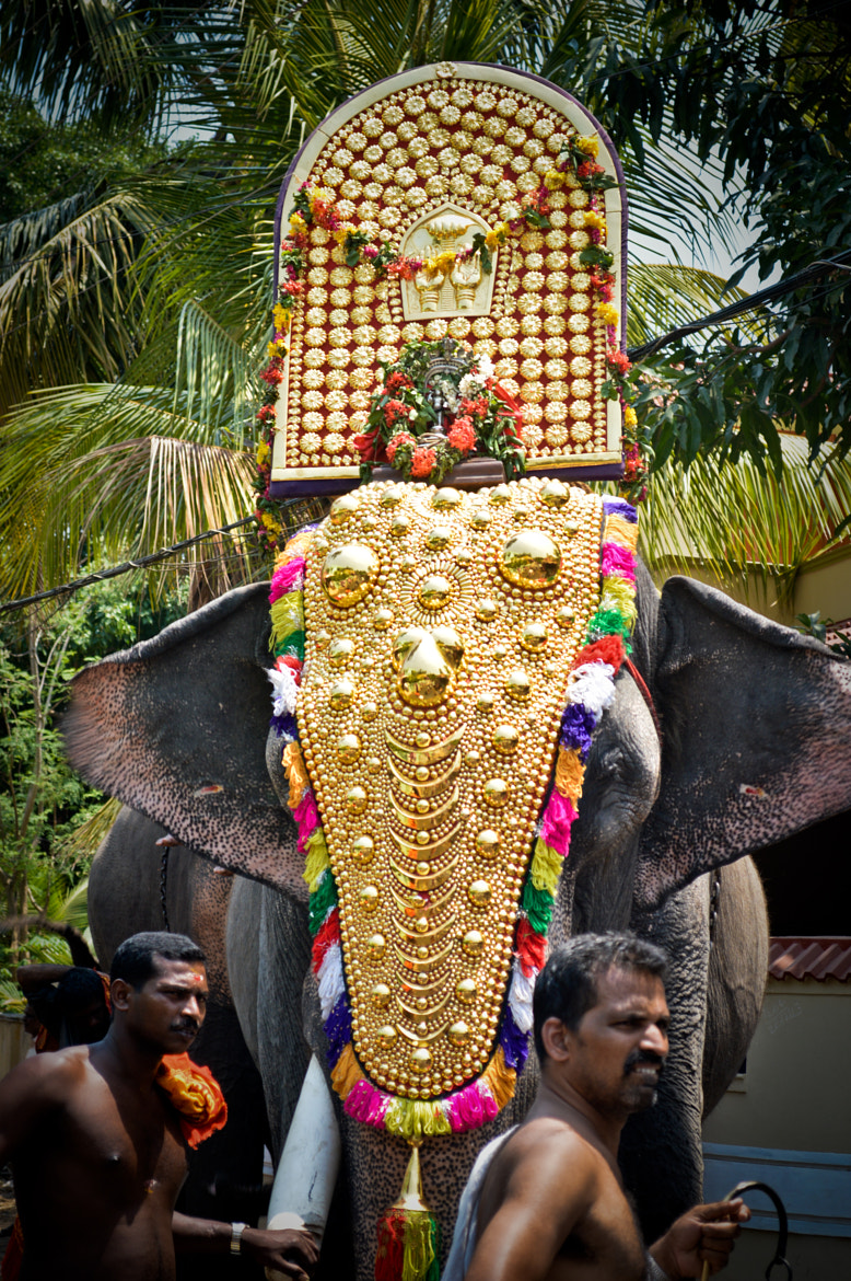 Photograph kerala Elephant by sajan Laks on 500px