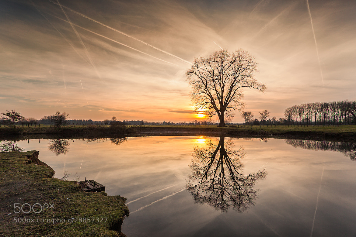 Photograph Sunset tree by Christophe Vandeputte on 500px
