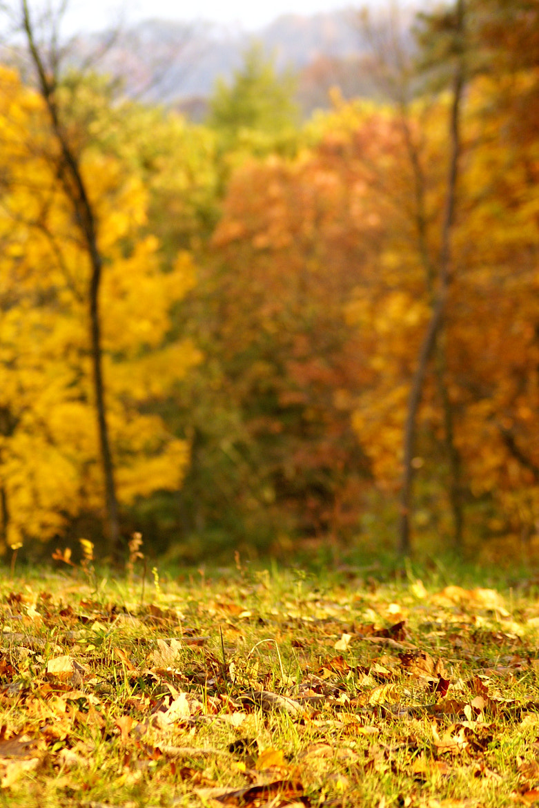 Photograph Yellow by Erika Kraus on 500px