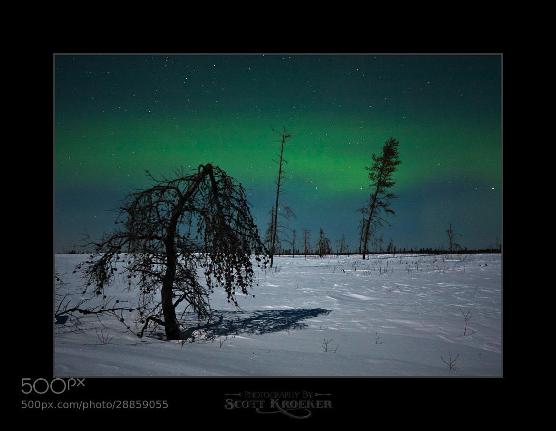 Photograph Dead Tree Aurora by Scott Kroeker on 500px