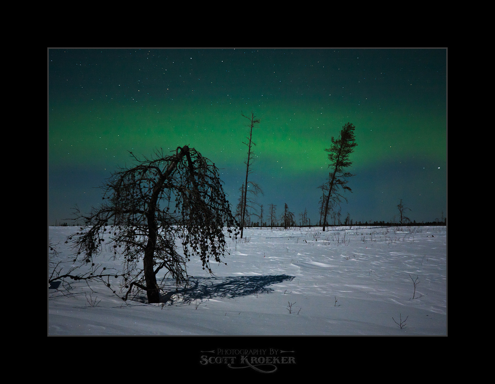 Photograph Dead Tree Aurora by Scott Kroeker on 500px
