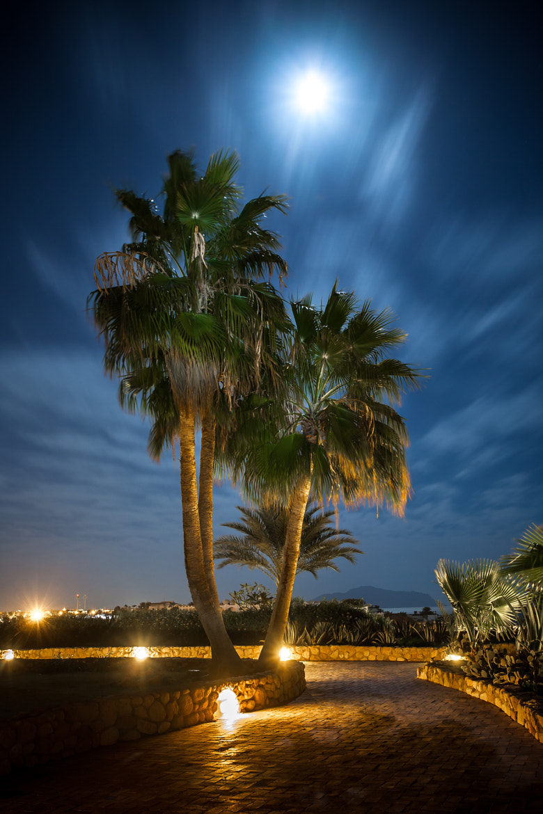 Photograph Palms under windy skies by Lukas Larsed on 500px