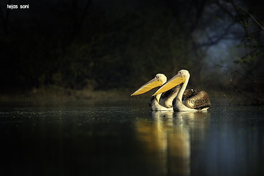 Photograph together forever by Tejas Soni on 500px