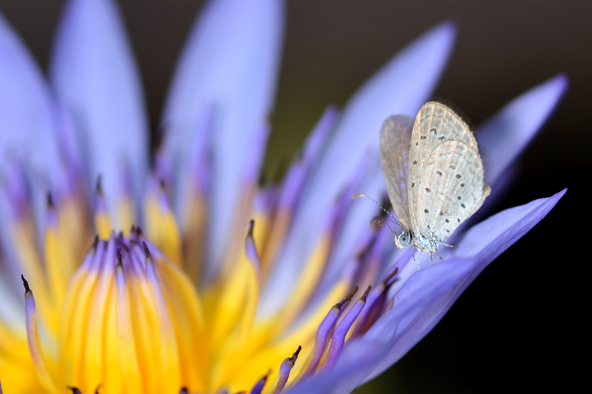 Photograph Lotus and the buttrefly by Anake Seenadee on 500px