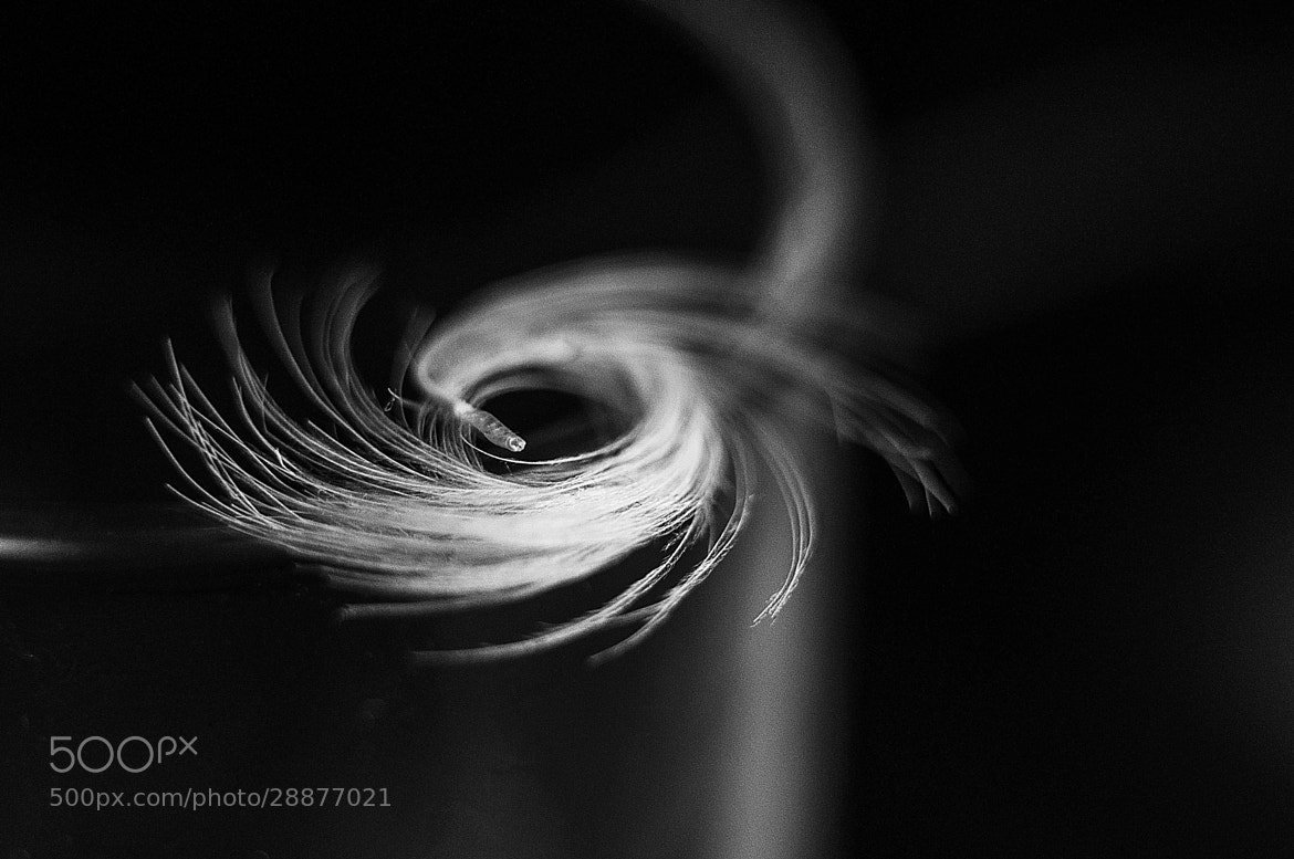 Photograph Feather hurricane by Yuri Bykadorov on 500px