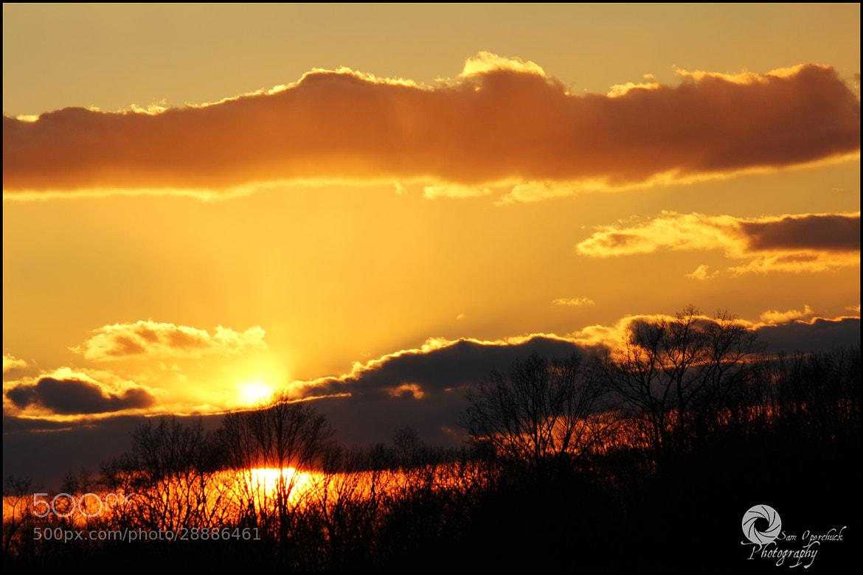 Photograph Golden Singe by Sam Operchuck on 500px