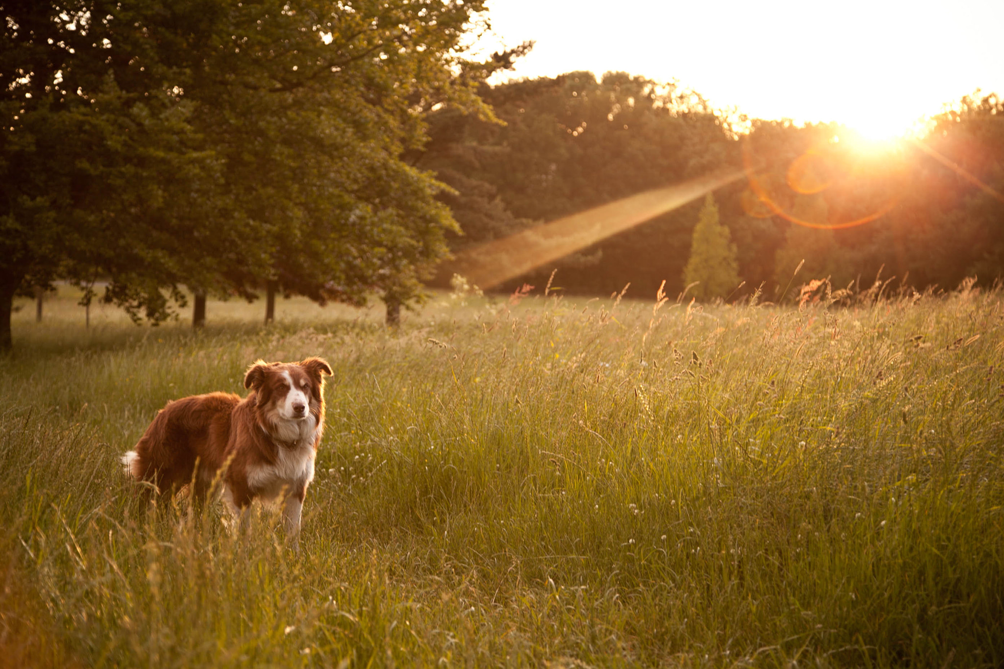 Photograph Late summer afternoons by Anna Goodrum on 500px