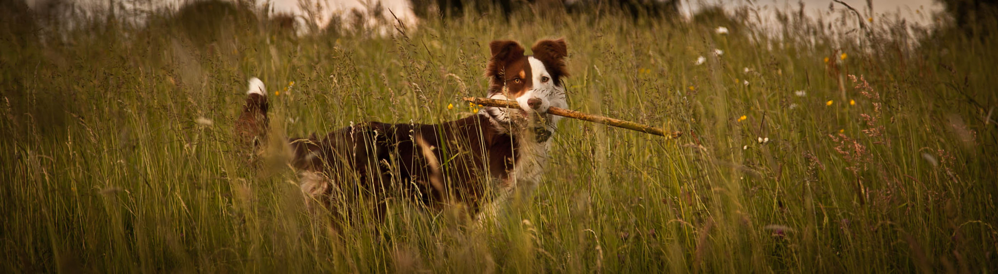 Photograph Playtime? by Anna Goodrum on 500px