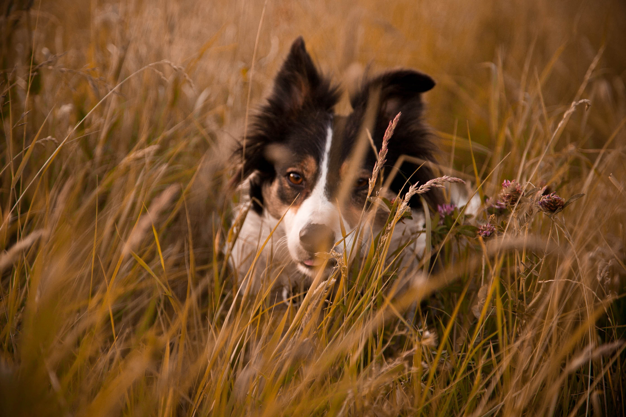 Photograph Hide and Seek by Anna Goodrum on 500px