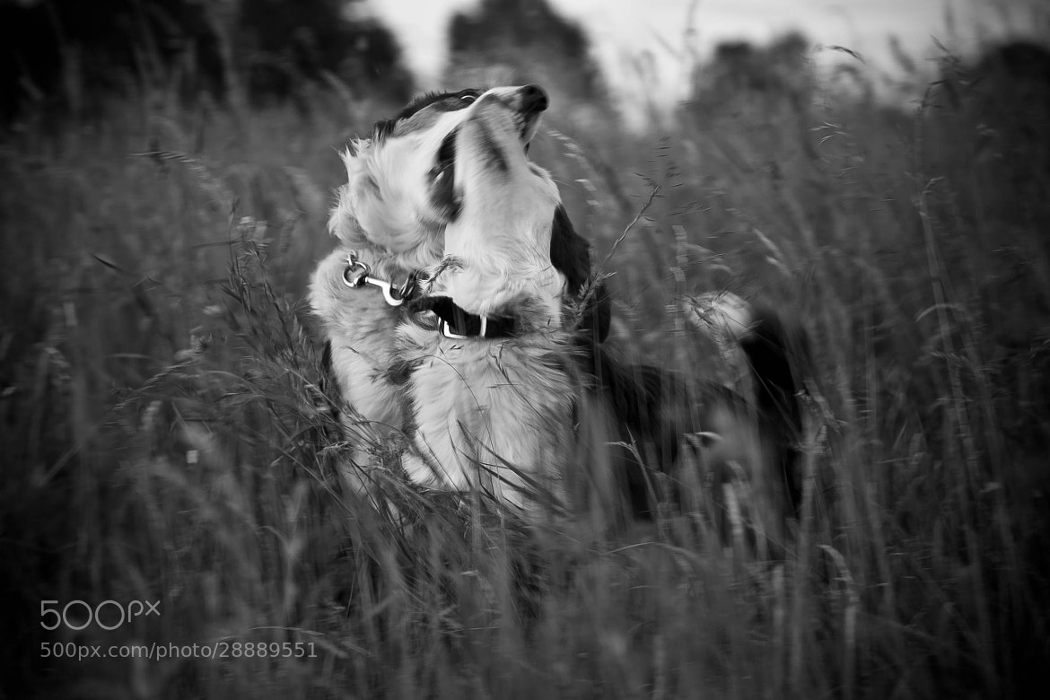 Photograph Playing in the long grass by Anna  Goodrum on 500px