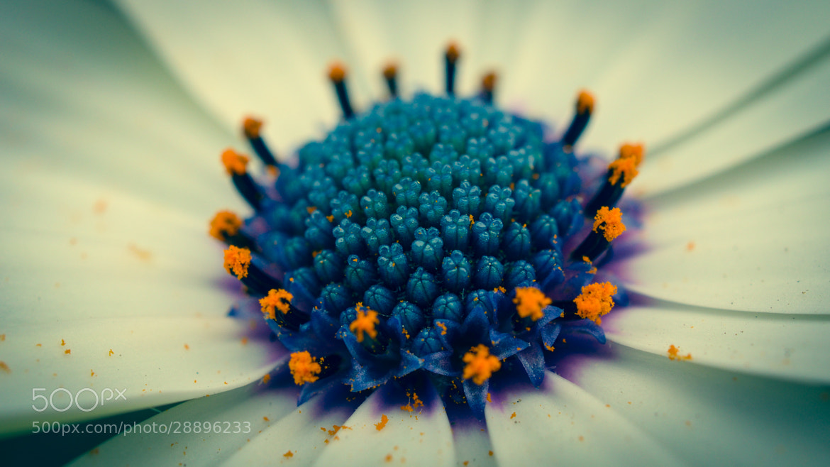 Photograph Blue, White, and Yellow by Himanshu Marathe on 500px