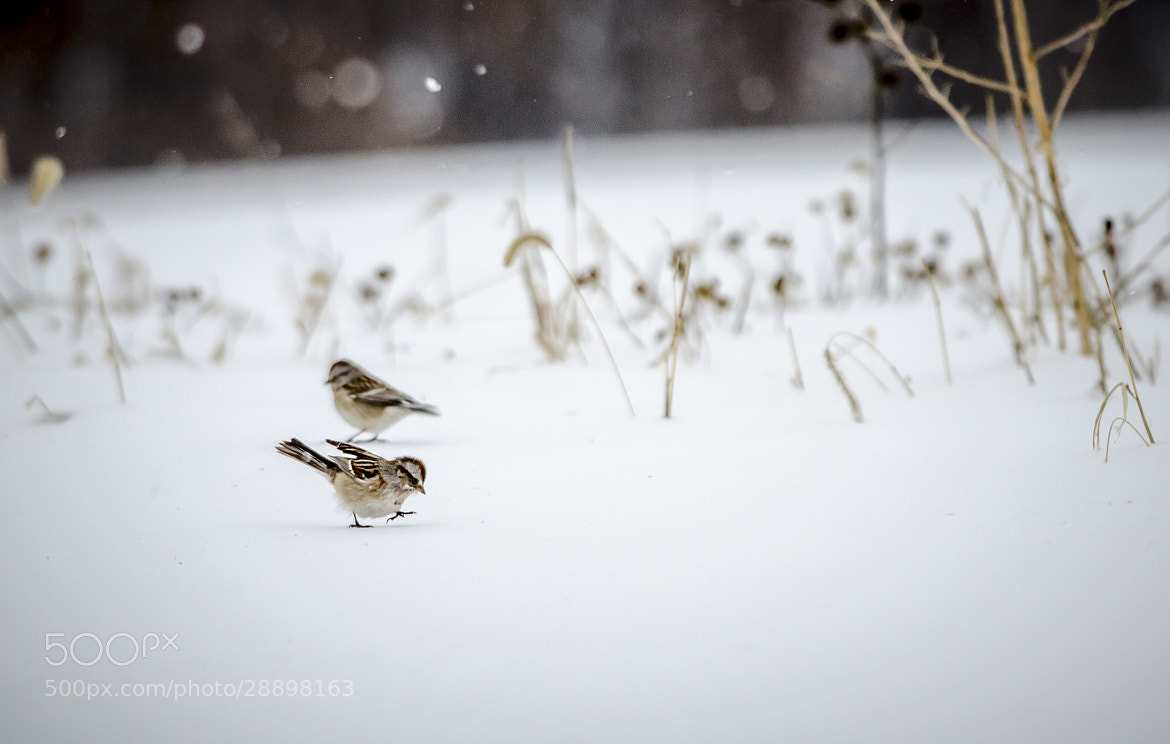 Photograph Cold Feet by Rusty Parkhurst on 500px
