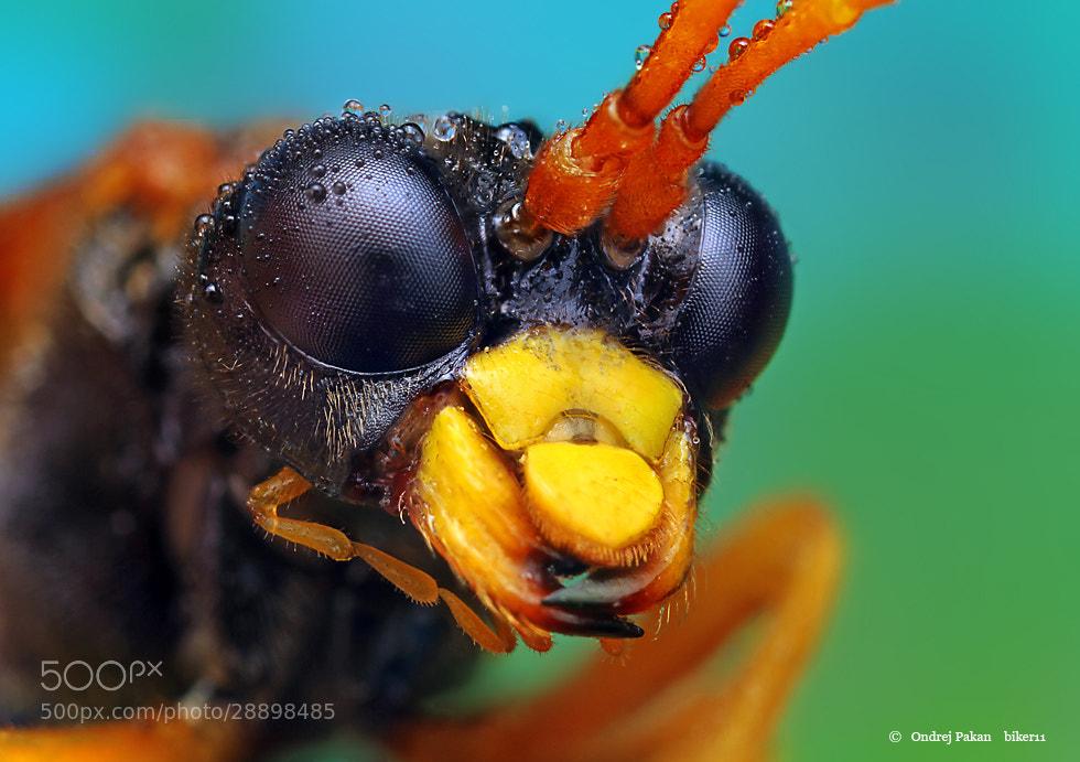 Photograph Big by Ondrej Pakan on 500px