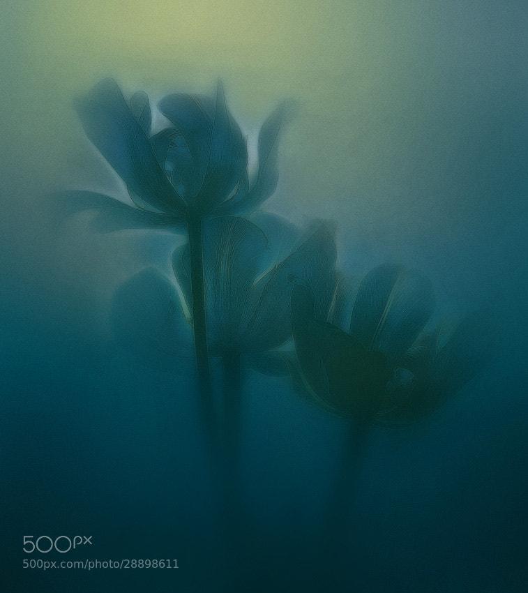 Photograph flowers of dream by Viacheslav Krasnoperov on 500px