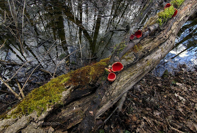 Photograph Forrest Mood I. by Jaro Miščevič on 500px
