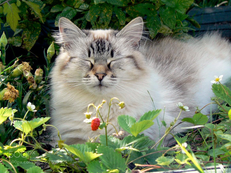 Photograph Nougat dans les fraises by Patrice BONRAISIN on 500px