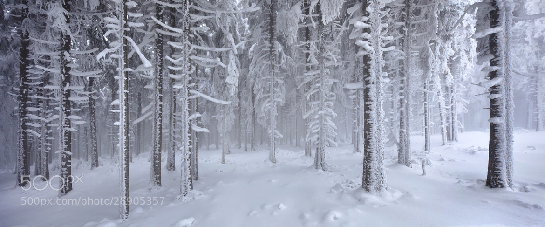 Photograph Everlasting Winter by Kilian Schönberger on 500px
