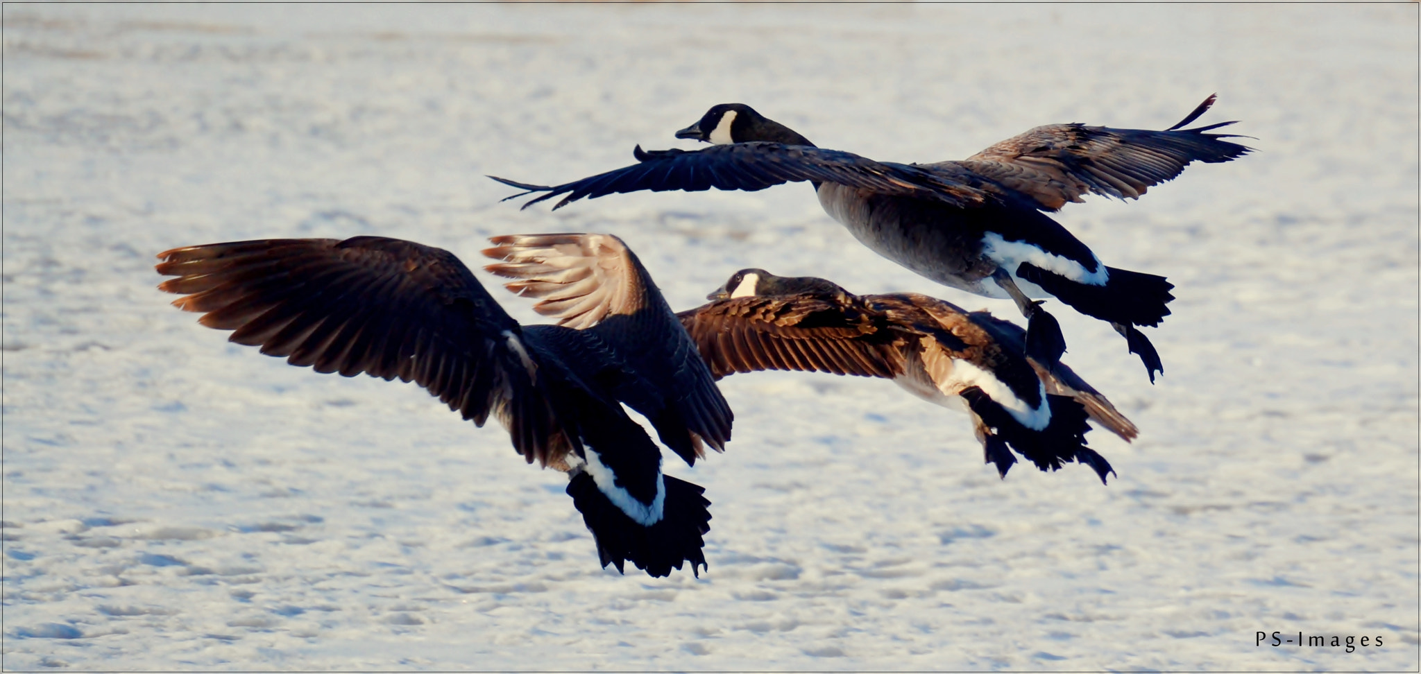 Photograph flying Birds  by prince sharma on 500px