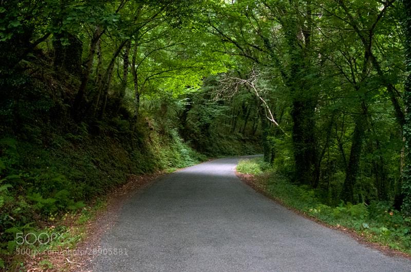 Camino de Santiago 2012  Triacastela - Samos III  _______________________________