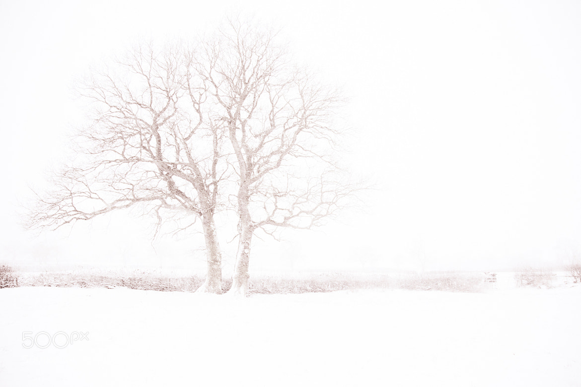 Photograph Whiteout by Penny Myles on 500px