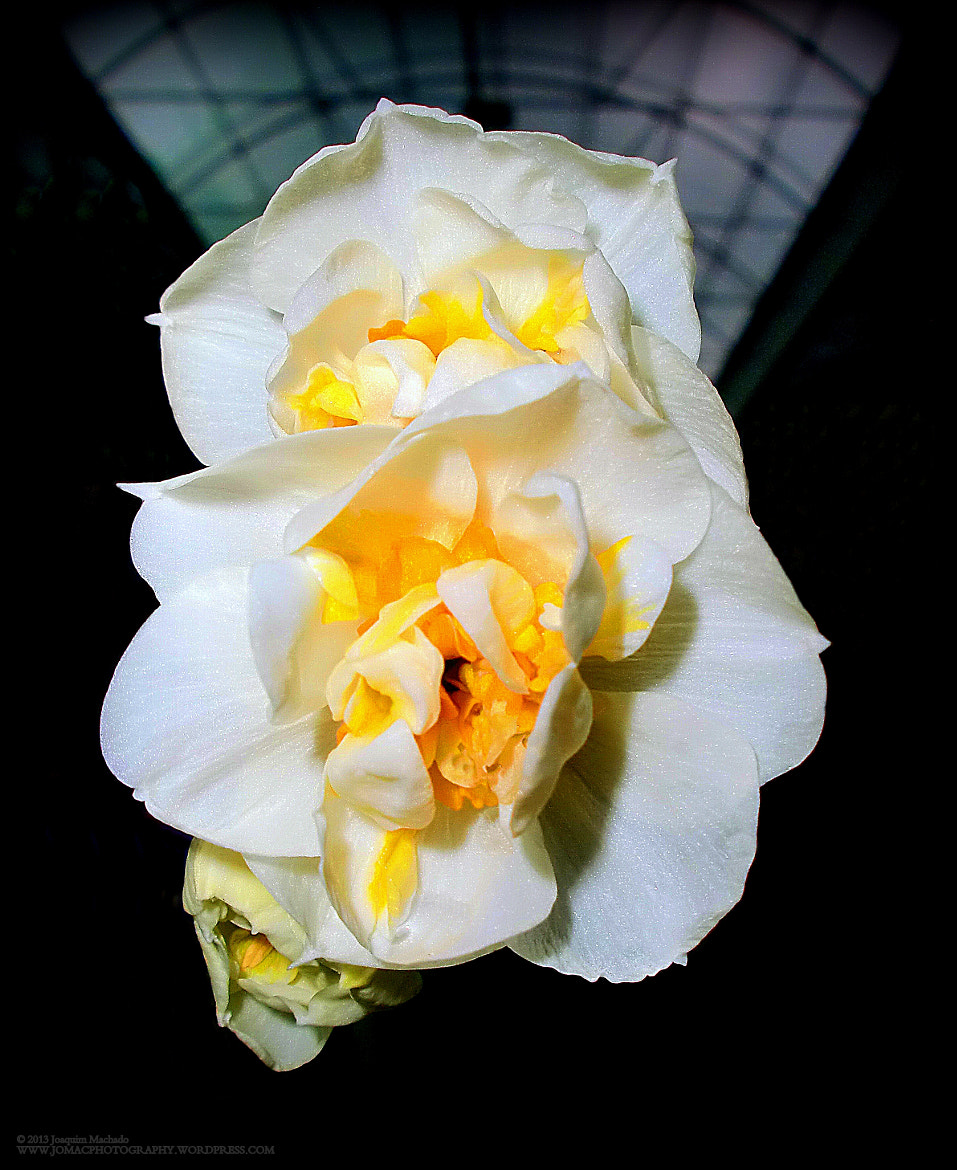 Photograph Your flower by Joaquim Machado on 500px