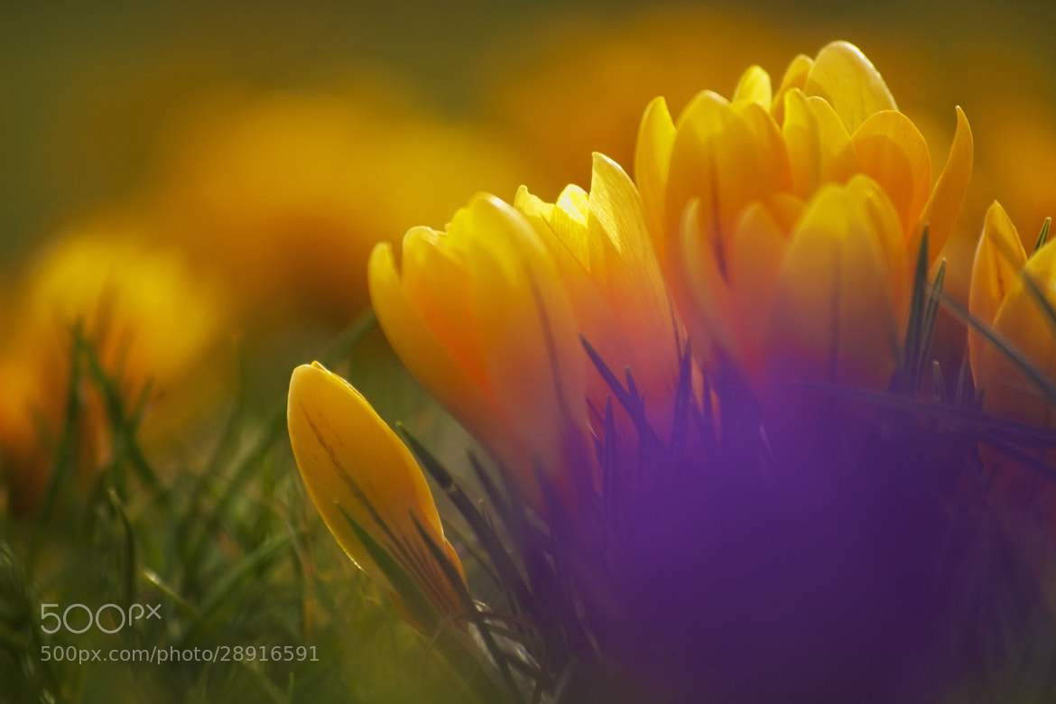 Photograph Spring by Mark  on 500px