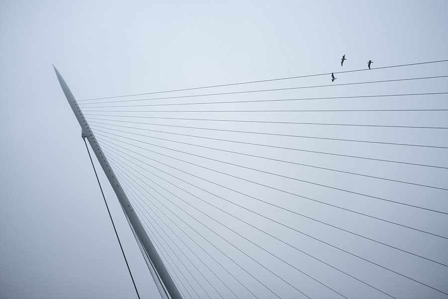 Birds flying into lines by Ana V. on 500px.com