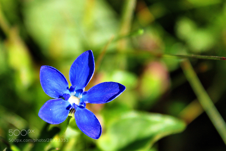 Photograph Blue dreams by Rausch Wilhelm Robert on 500px