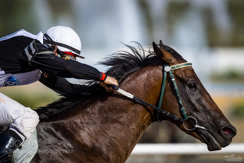 Photograph Horse Racing by Abu  Swailem on 500px