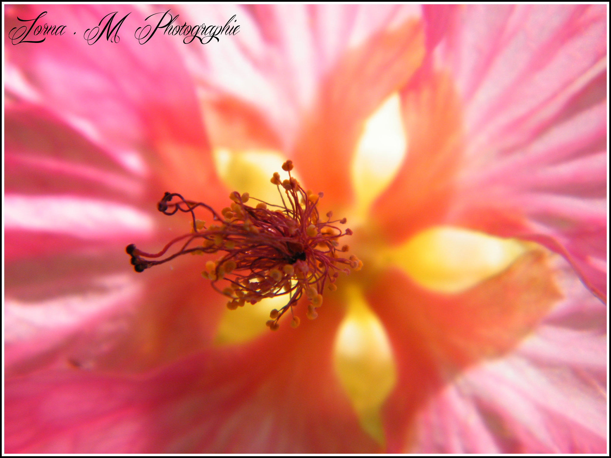 Photograph If small.. by Lorna Mantelet on 500px