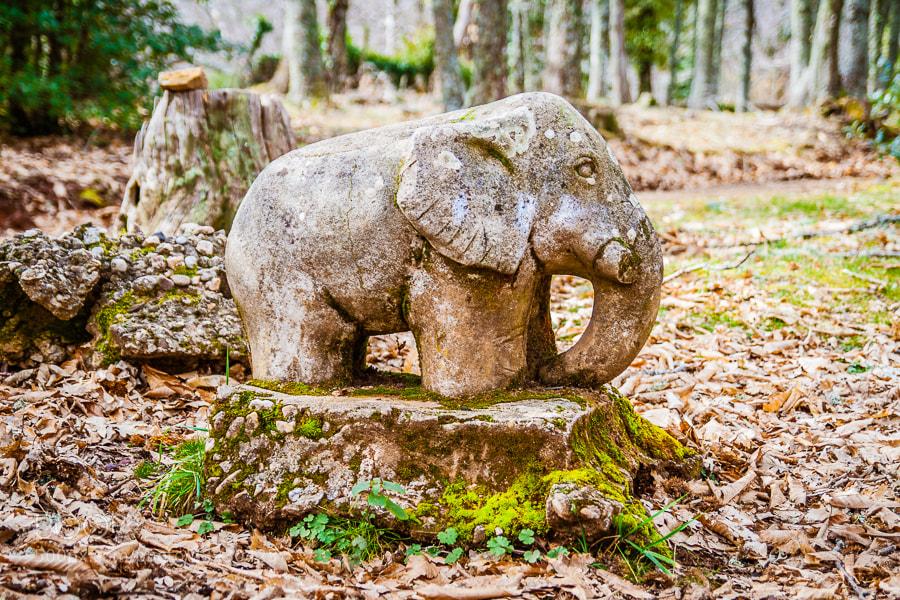 Photograph Elefante de Piedra by Jose Agudo on 500px