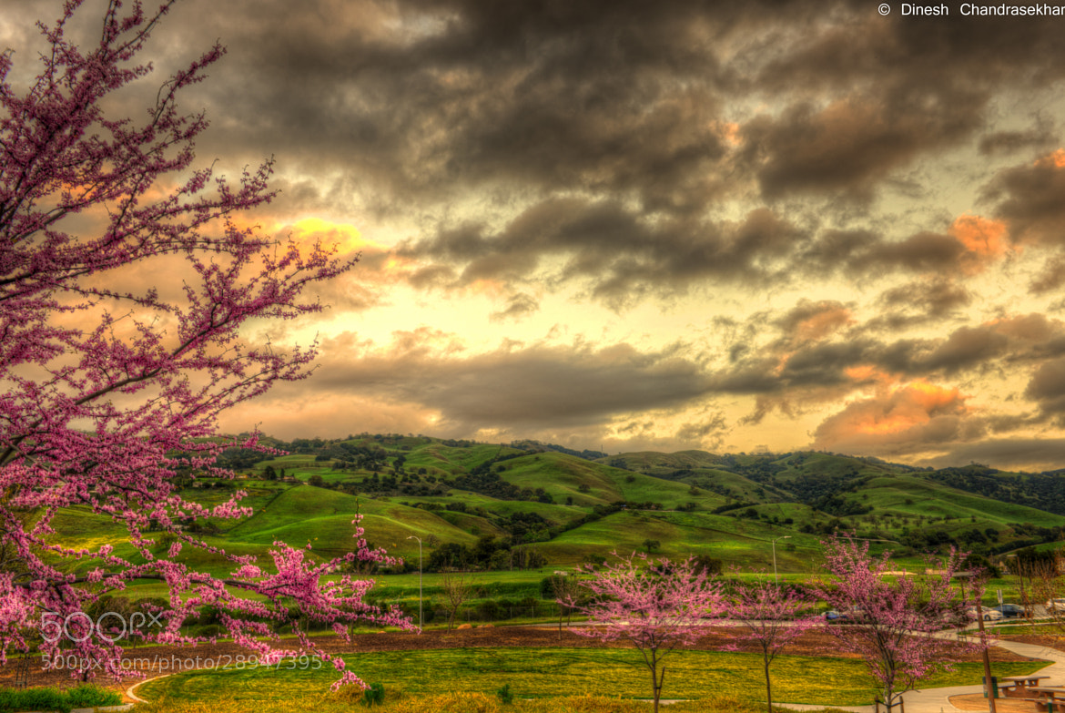 Photograph Blossoms at dusk by Dinesh Chandrasekhar on 500px