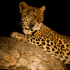 Sabi Sands Reserve, Kruger National Park, South Africa