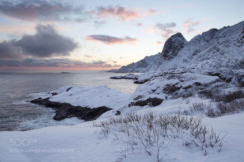 Photograph Lofoten at Dawn by Daniel Hannabuss on 500px