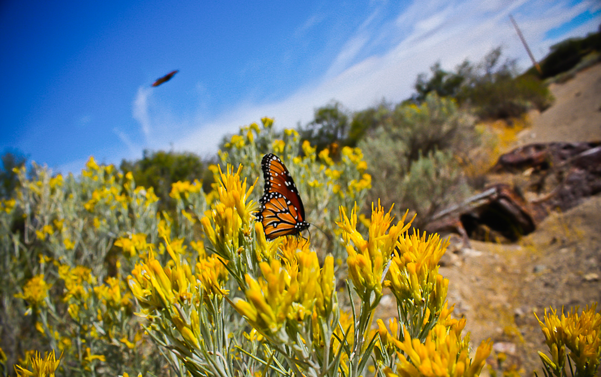 Photograph Monarch by Kirk Wallace on 500px