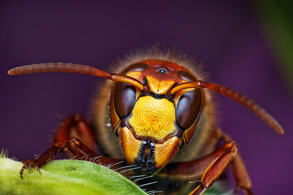 Photograph Hi! by Ondrej Pakan on 500px