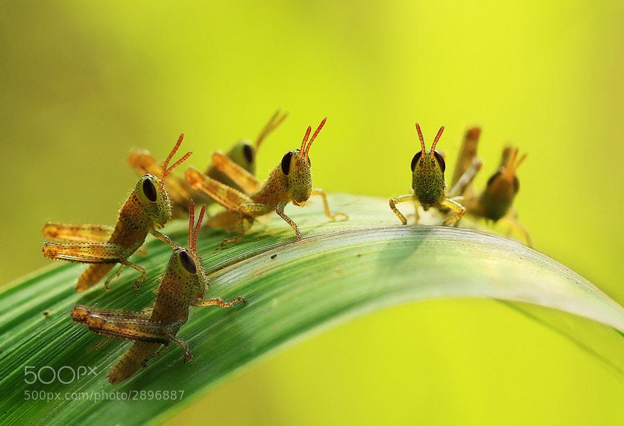Photograph Grasshopper Kids by Vincentius Ferdinand on 500px
