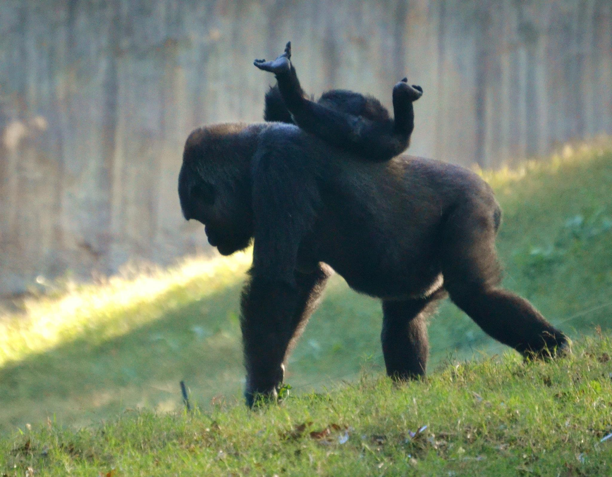 Photograph Piggy-Back Ride by Michael Fitzsimmons on 500px